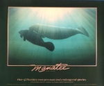 Walker Stanberry Manatee Poster