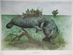 """God Bless you little one..."" Manatee Print"